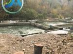 خرید پرورش ماهی جاده هراز لاریجان