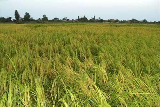 خرید زمین کشاورزی آمل ولیسده