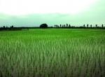 خرید زمین کشاورزی جاده حسین آباد کلوده