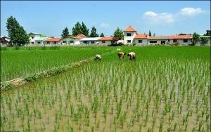 زمین کشاورزی شمال